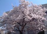 春の喜多方